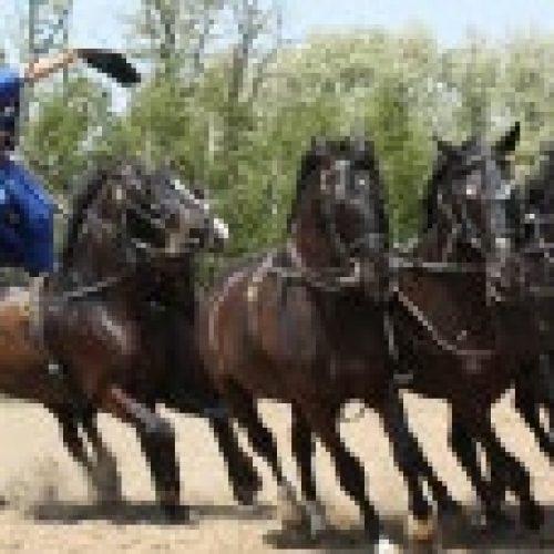 viségrad-violettacars-google-paardenshow.jpg